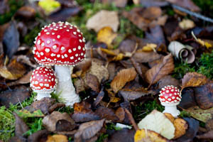 Dartmoor Photographer - Things to Photograph in Autumn - Fungi