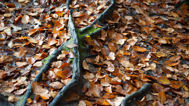 Dartmoor Photographer_Helen Northcott_Autumn_leaves on ground