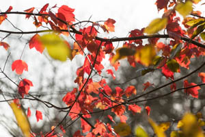 Dartmoor Photographer - Things to Photograph in Autumn - Leaves