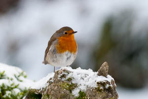 Dartmoor Photographer Winter Wildlife Photography
