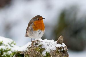Dartmoor Photographer Winter Wildlife Photography