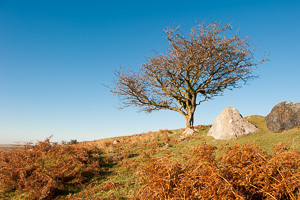 Dartmoor Photographer - Rule of Thirds