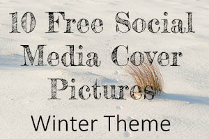 Dartmoor Photographer - Winter Photos