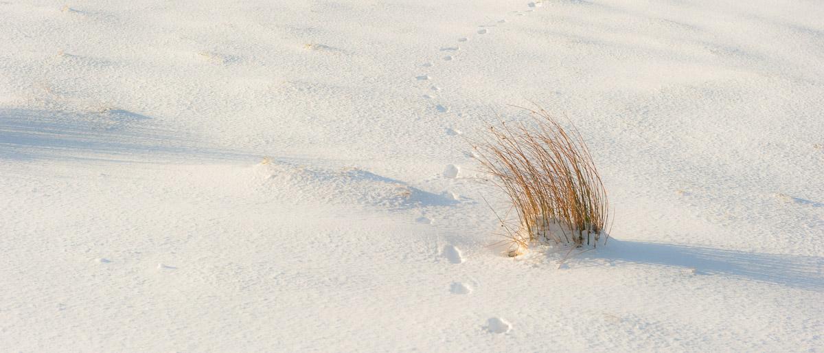 Dartmoor Photographer - Winter photo Pack