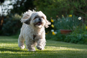 Dartmoor Photographer - How to photograph your dog