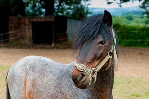 Dartmoor Photographer - How to photograph horses