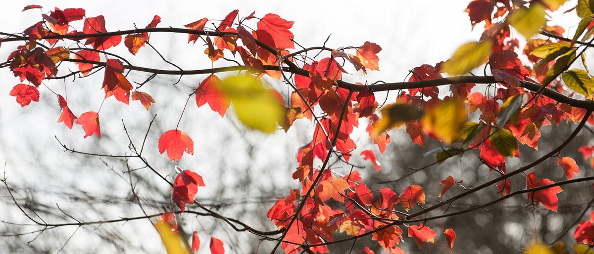 Dartmoor Photographer - Autumn Photo Pack